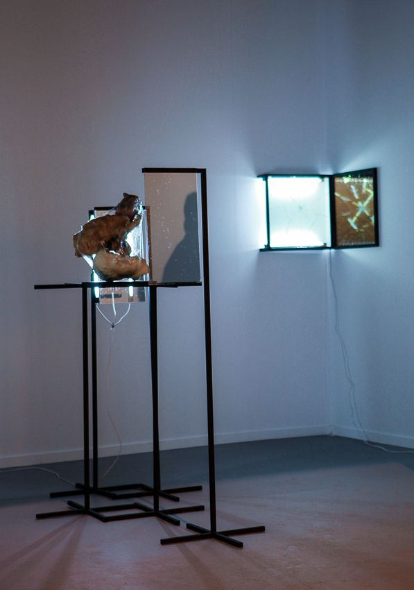 ARCO Madrid, Installation view, Steve Turner Contemporary, Booth 7SP03, February 2014