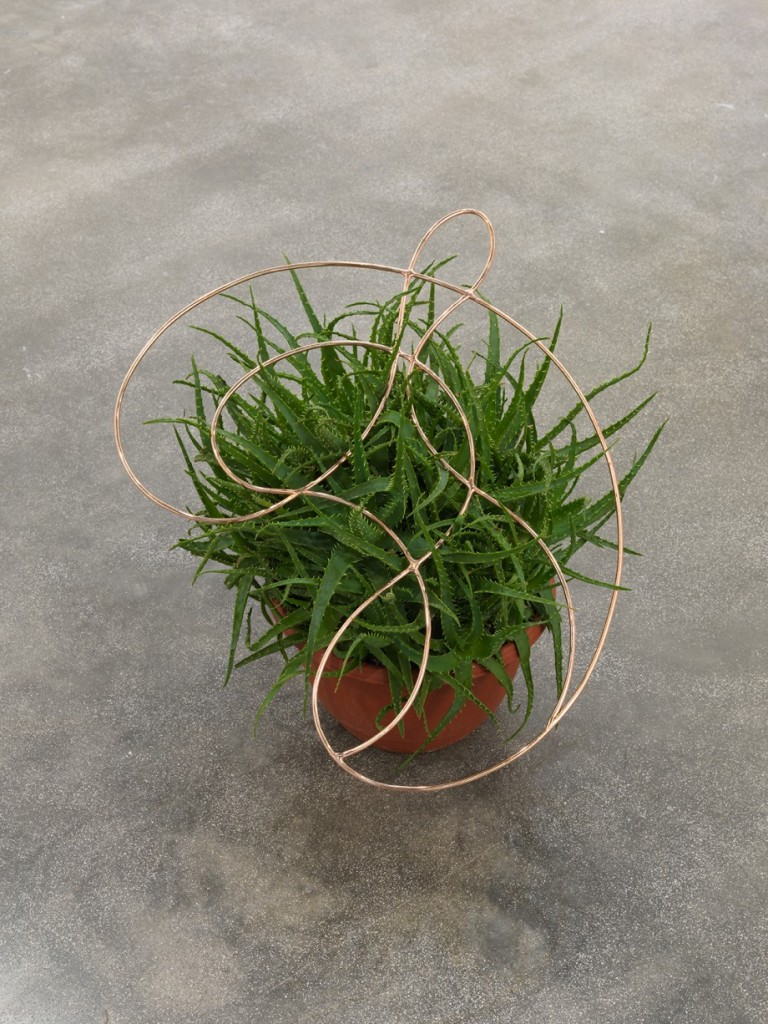 Edgar Orlaineta. Invisible knot, 2014. Copper plated steel and aloe in ceramic pot, 20 1/2 x 20 7/8 x 3/16 inches