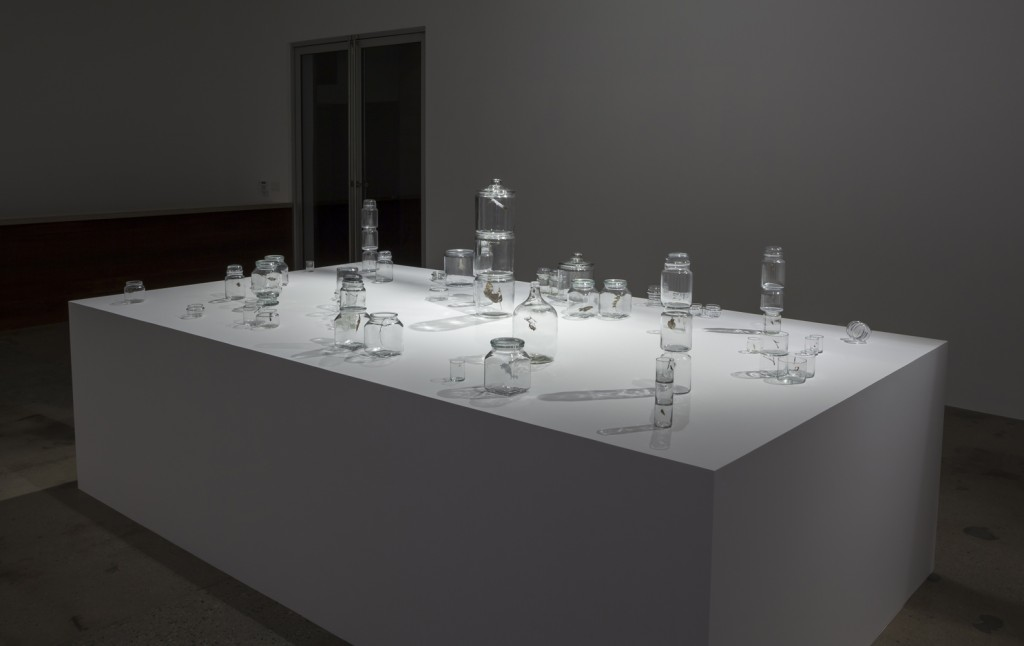 Pablo Rasgado, Steve Turner, Los Angeles, Mexico City, Conceptual artist, Mexican artist, Mexico contemporary art, Installation art, Steve Turner Contemporary, jars, spider web, mirrors