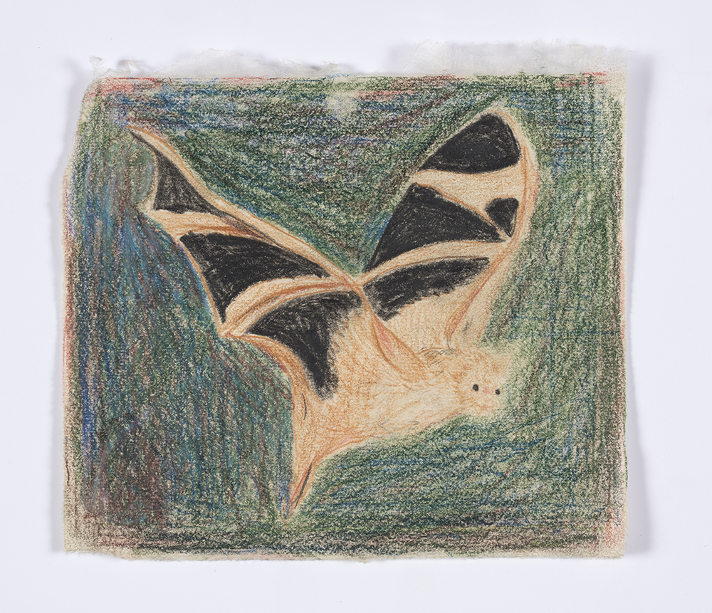 Kevin McNamee-Tweed. <em>Bat in My House on Sunday</em>, 2019. Graphite and colored pencil on mulberry paper, 5 3/4 x 6 1/4 inches  (14.6 x 15.9 cm)